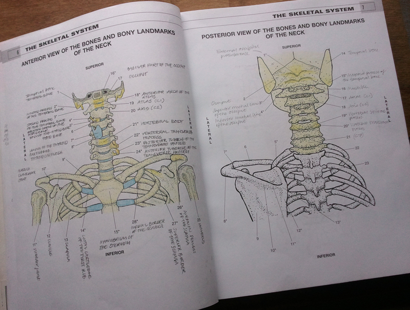 A Page From The Anatomy Colouring Book